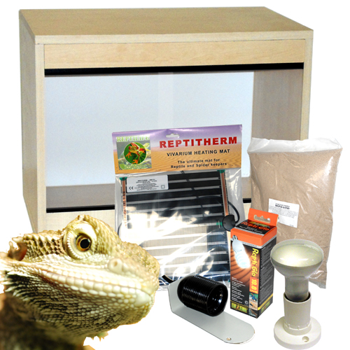 60cm Bearded Dragon Starter Kit